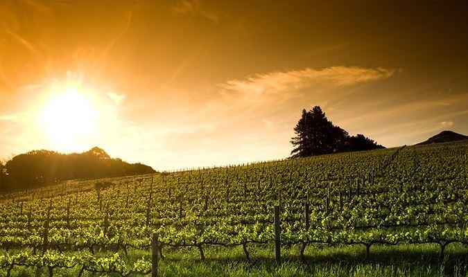 Taste of Harvest - Spotlight Calistoga