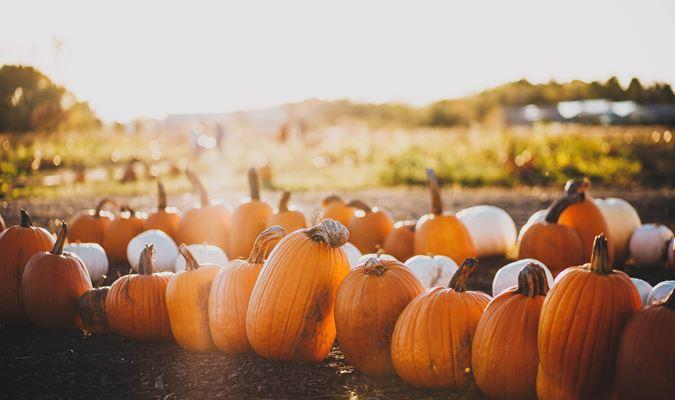 Taste of Harvest - Pumpkin Spice and Everything Nice