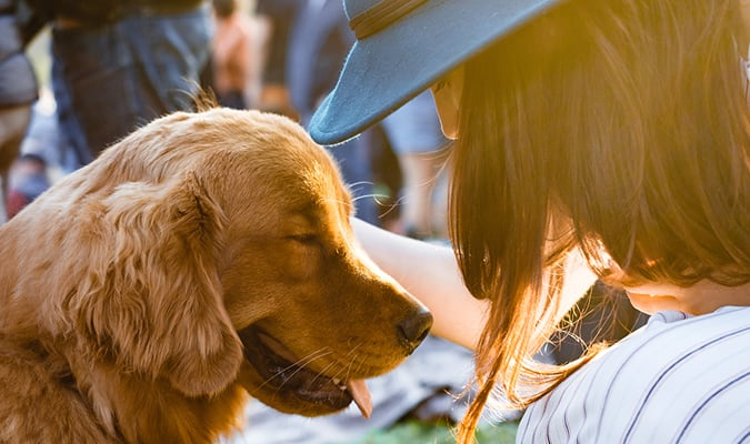 The 10 Best Pet Friendly Wineries in Napa Valley