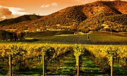 Best of Dry Creek Valley Image