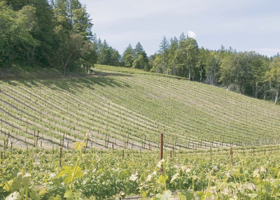 A gallery image (9460) of Langtry Estate & Vineyards from CellarPass