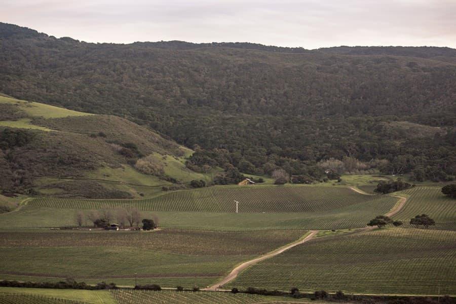 A gallery image (10990) of Sanford Santa Barbara from CellarPass