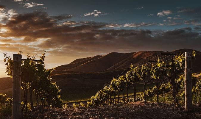 A gallery image (20352) of Encore Winery from CellarPass