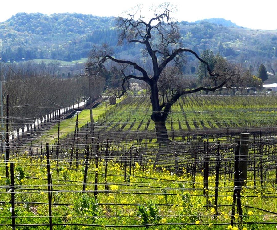 A gallery image (7) of Alexander Valley Vineyards from CellarPass