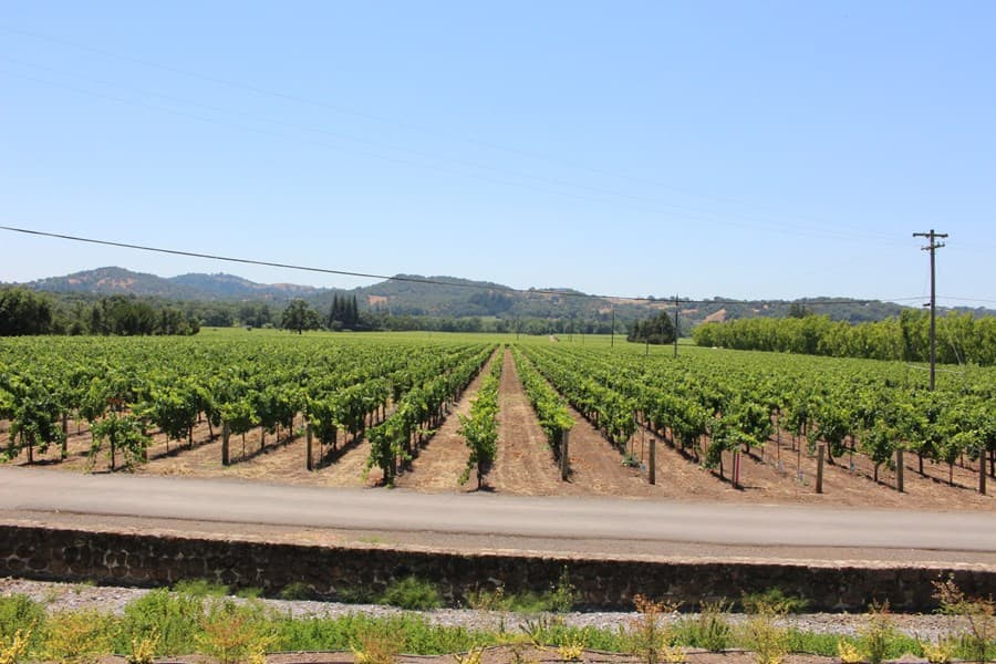 A gallery image (7960) of Alexander Valley Vineyards from CellarPass