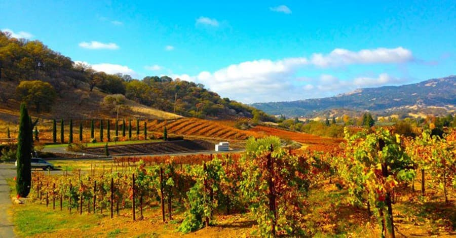 A gallery image of Vezer Family Vineyard from CellarPass
