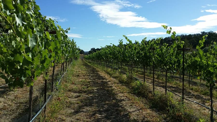 A gallery image of Fults Family Vineyards from CellarPass