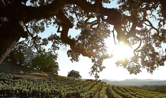 A gallery image of Jordan Vineyard & Winery from CellarPass