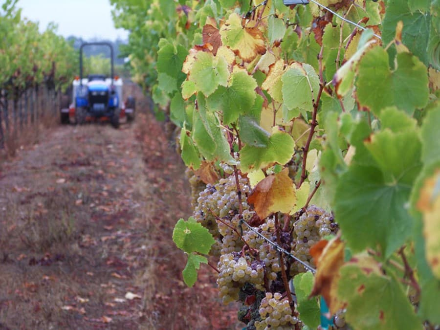 A gallery image (1476) of Inspiration Vineyards from CellarPass