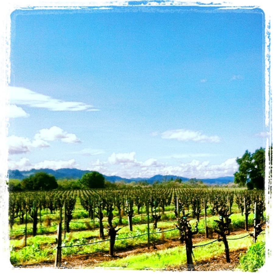An image from Foppiano Vineyards