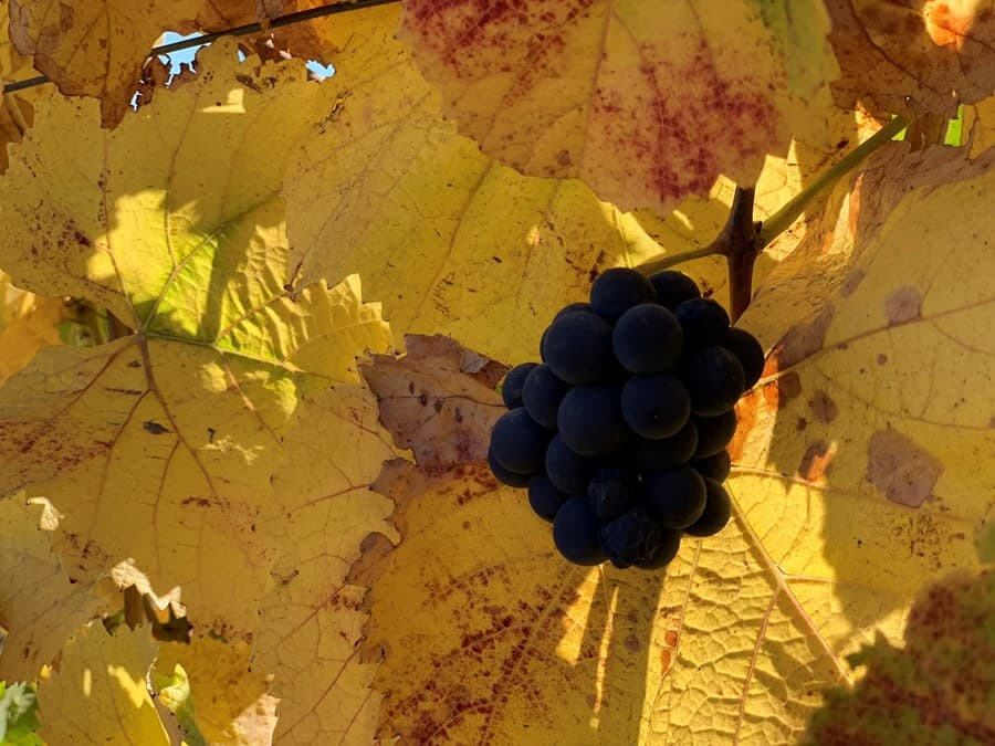 A gallery image of Hahn Family Wines from CellarPass