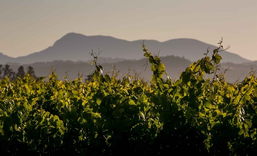 A gallery image (8310) of Inman Family Wines from CellarPass