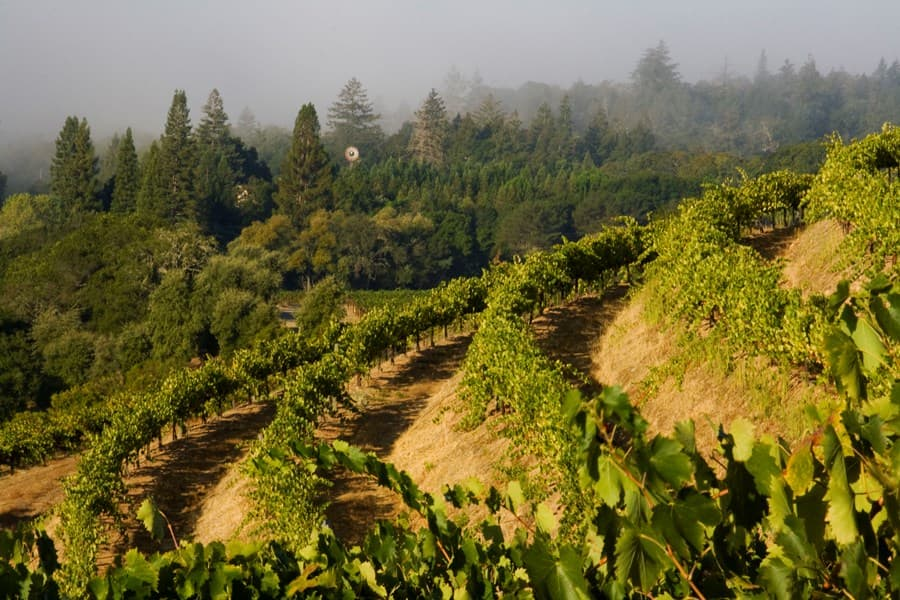 A gallery image (9126) of J. Pedroncelli Winery from CellarPass