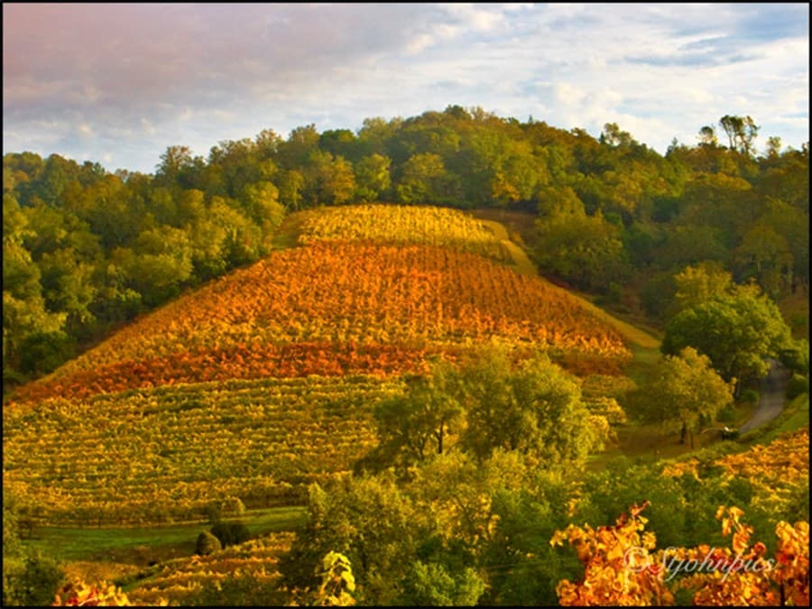 A gallery image (9130) of J. Pedroncelli Winery from CellarPass