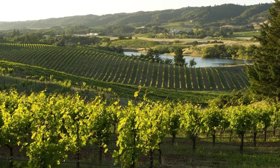 A gallery image of Ridge Vineyards- Lytton Springs from CellarPass