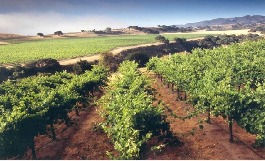 A gallery image (8971) of Paraiso Vineyards from CellarPass