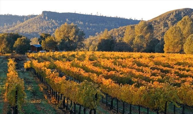 Noggle Vineyards  Winery