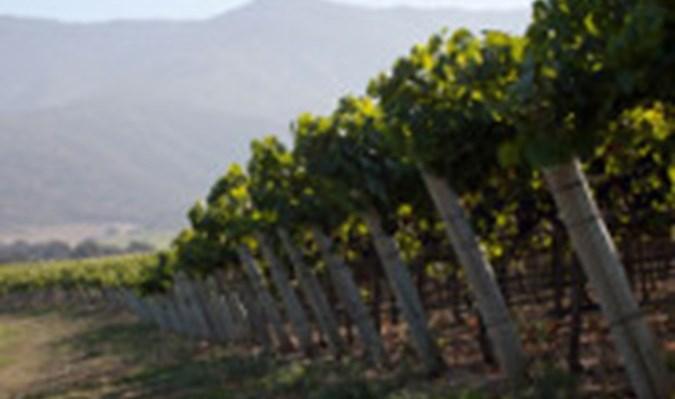 August West Wine