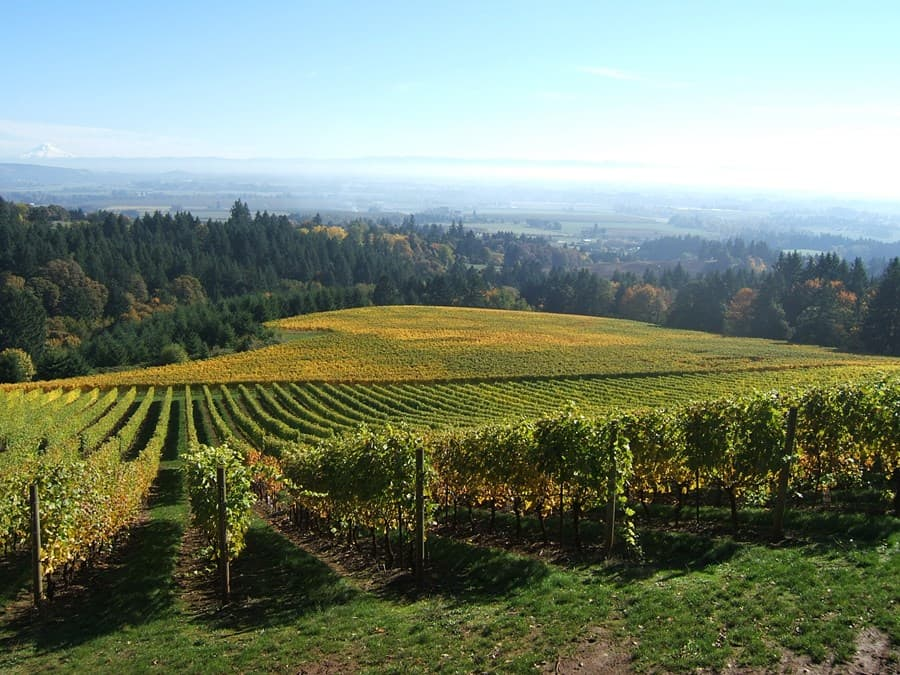 A gallery image of Domaine Serene Winery from CellarPass