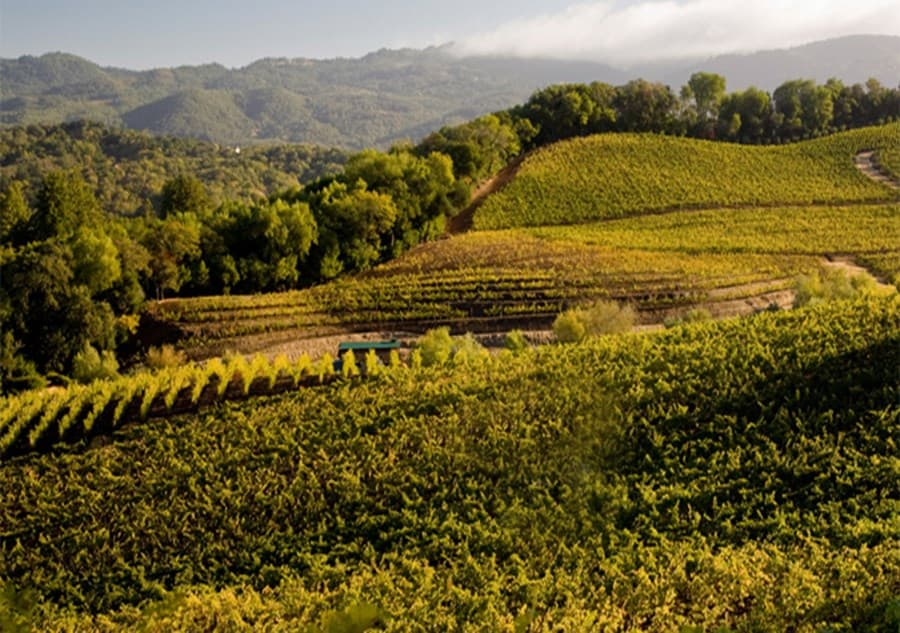 A gallery image of Benziger Family Winery from CellarPass