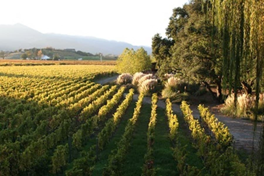 A gallery image (20036) of Tamber Bey Vineyards from CellarPass