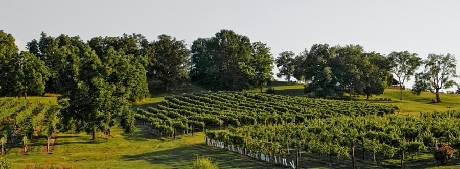 A gallery image (13417) of Arrington Vineyards from CellarPass