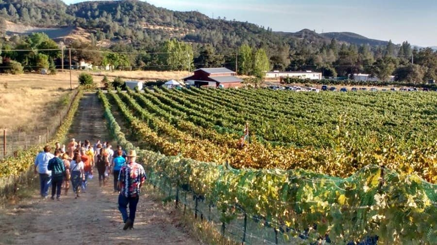 A gallery image of Locke Vineyards from CellarPass