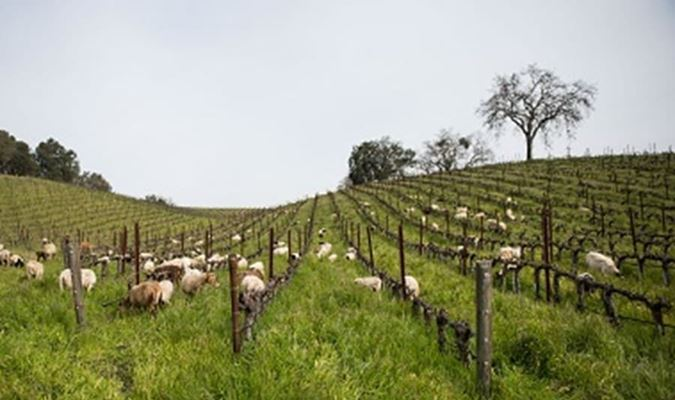 A gallery image (17521) of Tablas Creek Vineyard from CellarPass