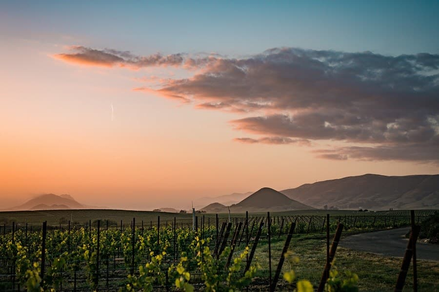 A gallery image of Edna Valley Vineyard from CellarPass