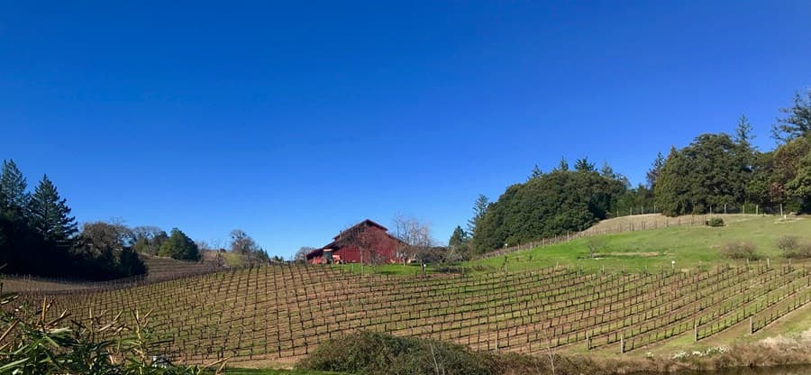 A gallery image (18174) of Rockpile Vineyards from CellarPass