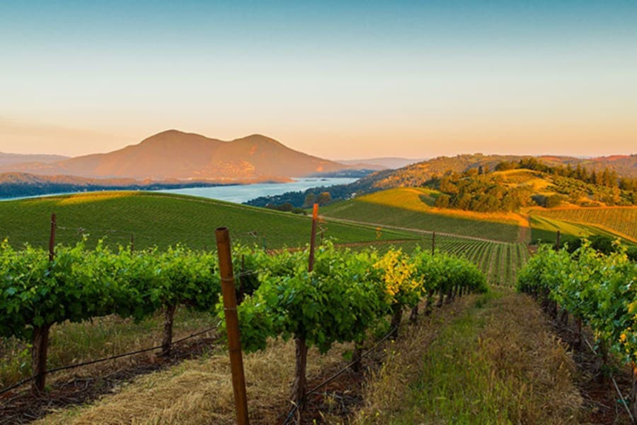 A gallery image of Vigilance Vineyards and Winery from CellarPass