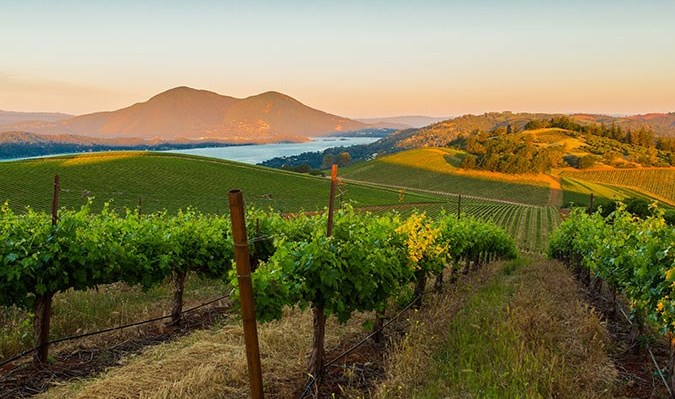 Vigilance Vineyards and Winery