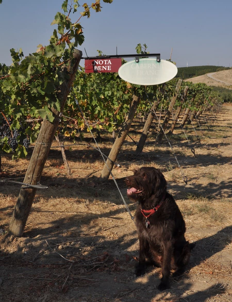 A gallery image of Nota Bene Cellars from CellarPass