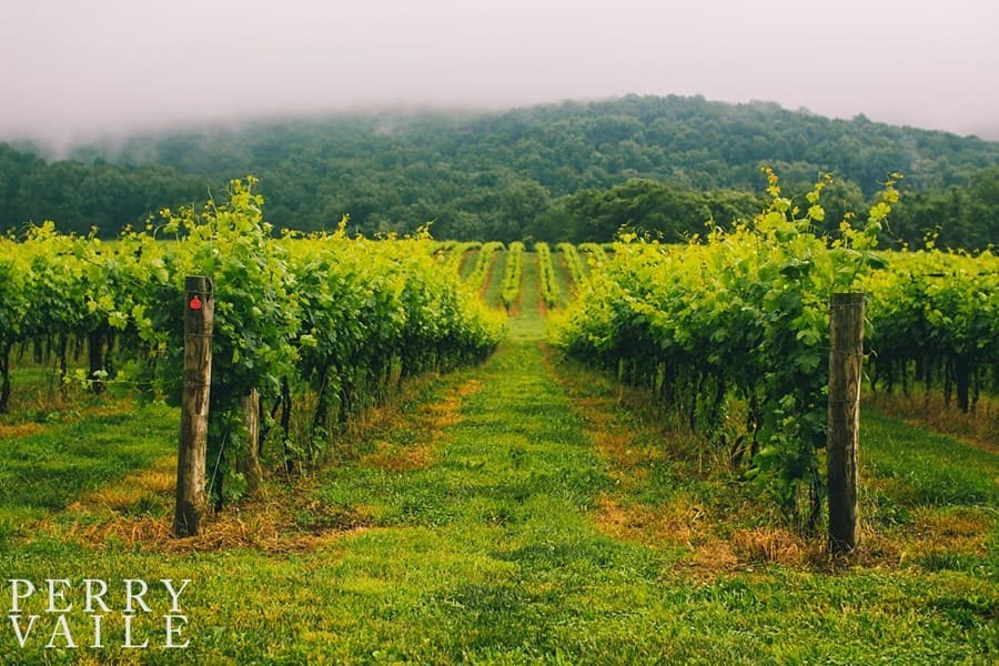 A gallery image of Breaux Vineyards from CellarPass