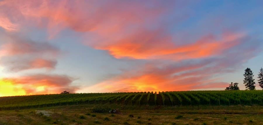 A gallery image of J Wrigley Vineyards from CellarPass