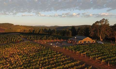 J Wrigley Vineyards