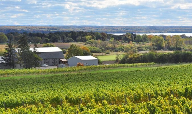 A gallery image (23396) of Ravines Wine Cellars from CellarPass