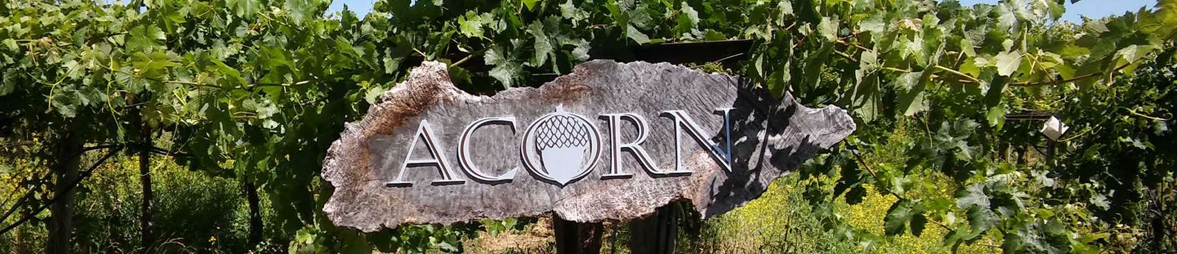 ACORN Winery / Alegría  Vineyards