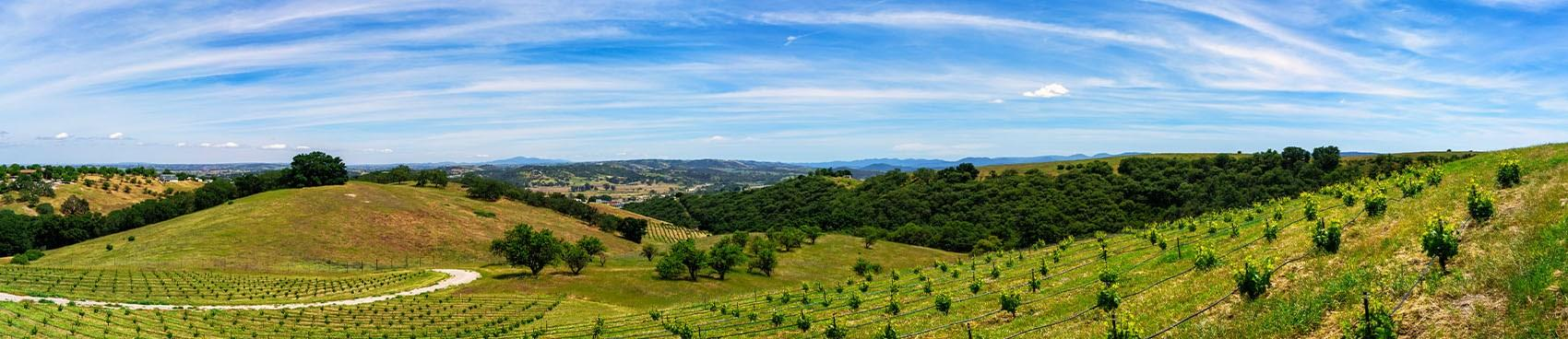 A image of Copia Vineyards and Winery