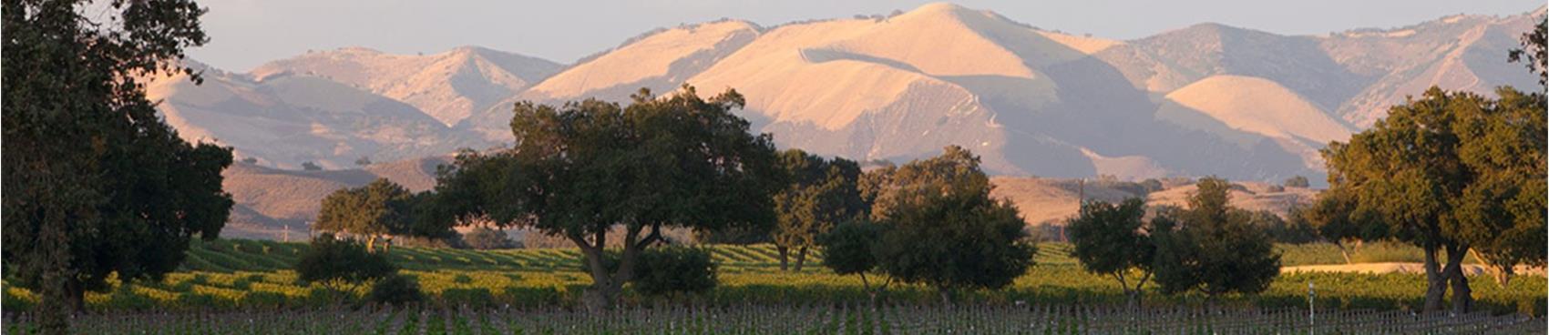 Firestone Vineyard & Winery