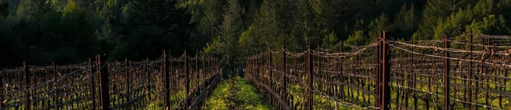 A image of Flanagan Winery