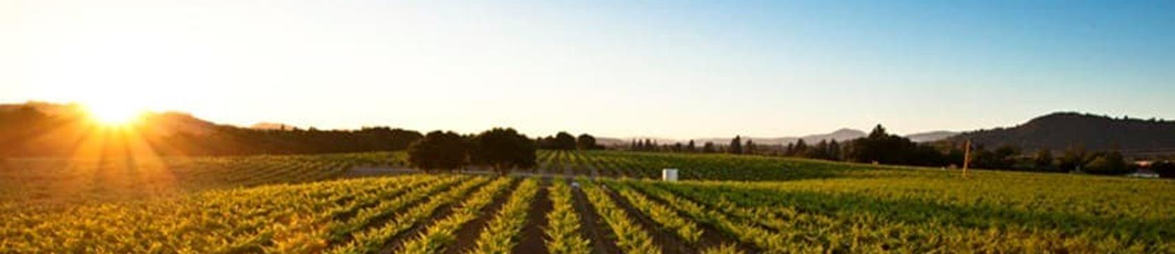 A image of Foppiano Vineyards
