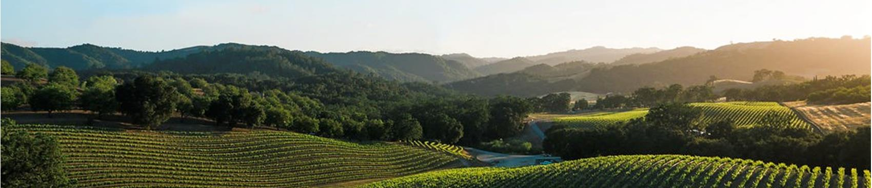 A image of Opolo Vineyards