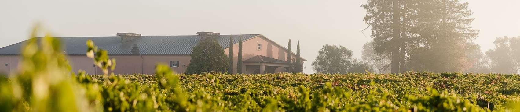 A image of Pellegrini Wine Company