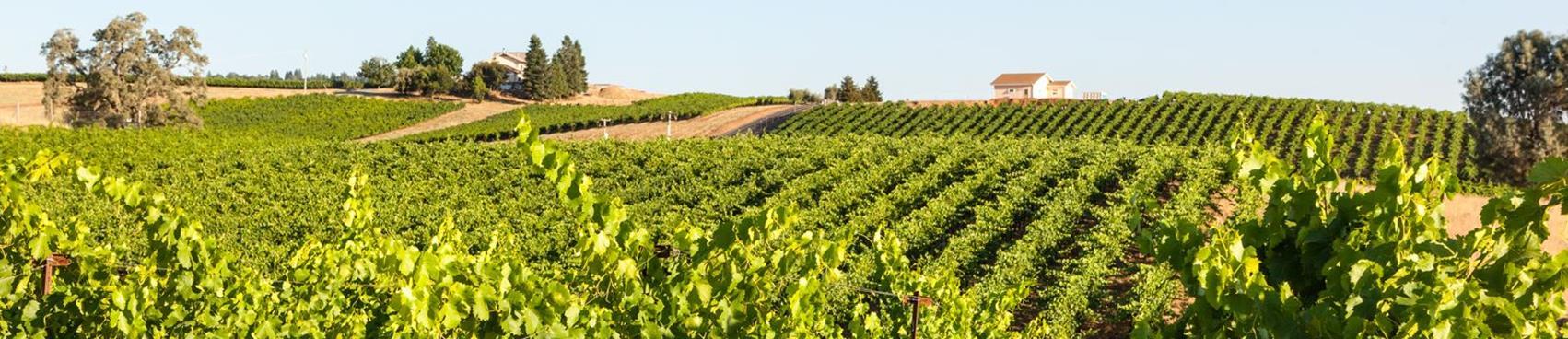 A image of Shadow Ranch Vineyard