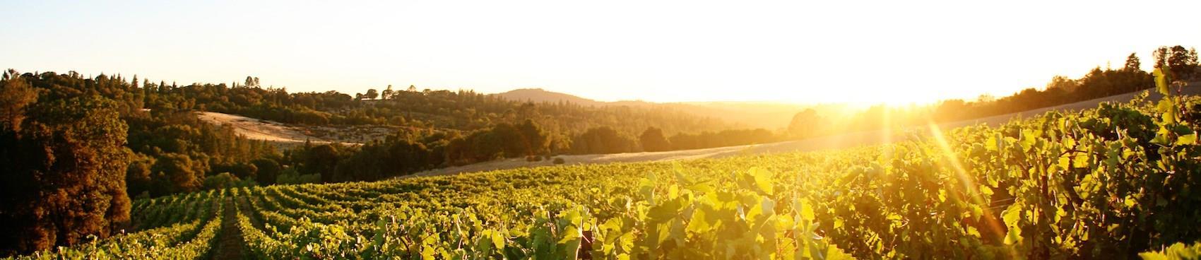A image of Skinner Vineyards & Winery