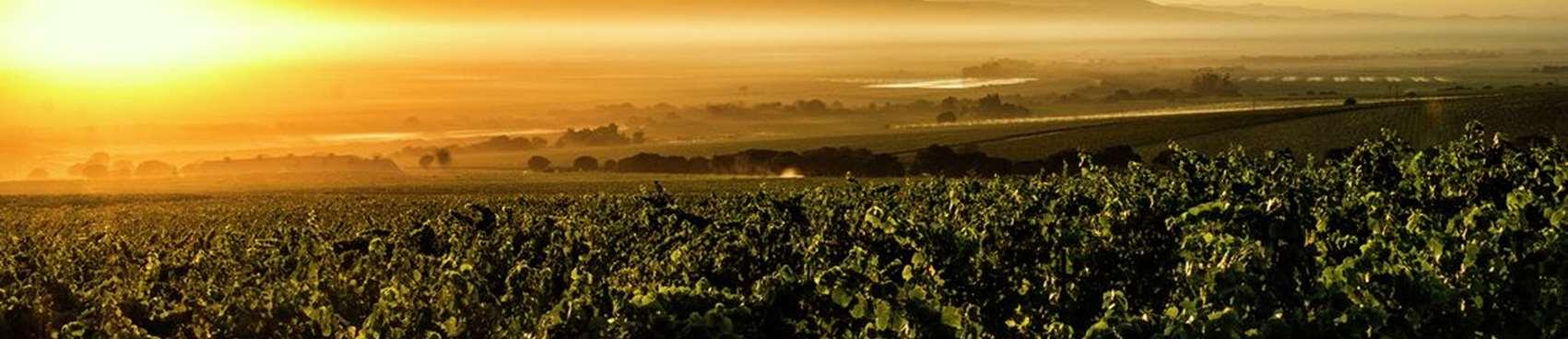 A image of Talbott Vineyards
