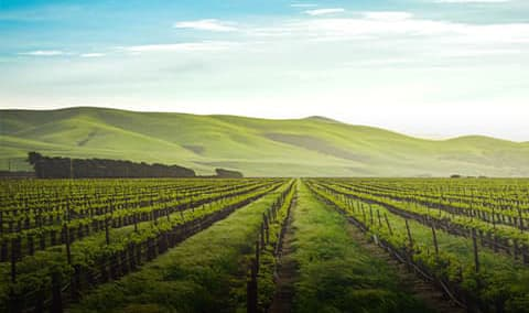Landmark Vineyards Educational Seminar with the Winemaker