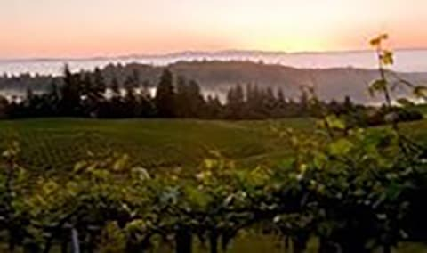 A Taste of HALL - Mix it up in March, feat. Mt Veeder Cabernet