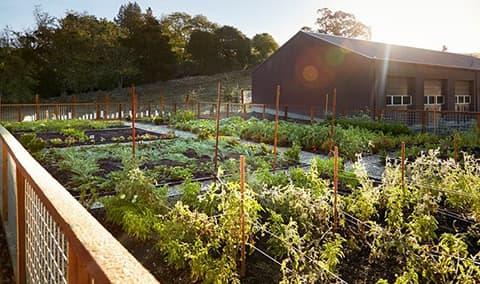 Fall Harvest Culinary Garden Pairing